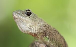 La cabeza de un reptil