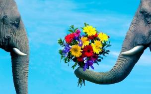Amor en los animales