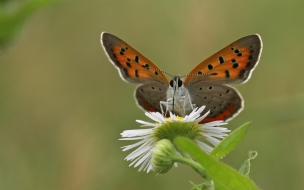 Mariposas en flores