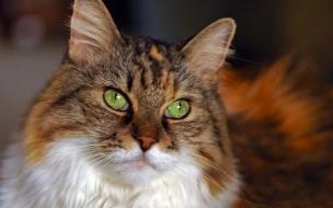 Gato ojos verdes