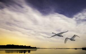 Aves volando sobre un lago