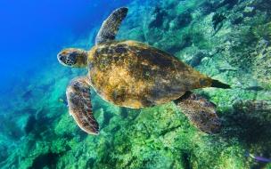 Una tortuga buceando en el mar