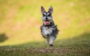 Un perro saltando