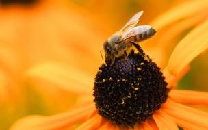 Una abeja en una flor amarilla