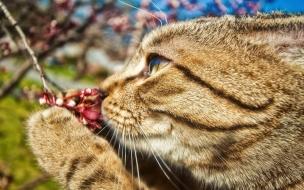 Gatos oliendo flores