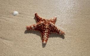 Estrellas de mar en playas