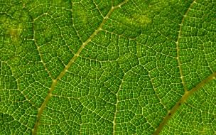 Textura de hoja de arbol