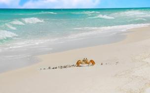 Cangrejo caminando en la playa
