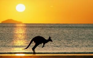 Canguro saltando en la playa