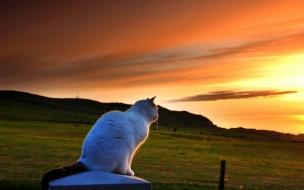 Un gato viendo el atardecer