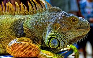 Una gran iguana verde