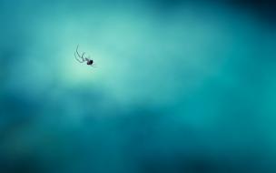 Una araña sobre su telaraña