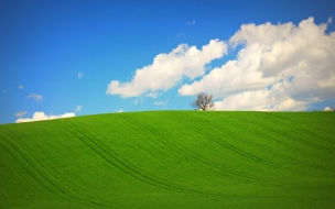 Hermosa pradera verde