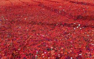 Miles de flores rojas