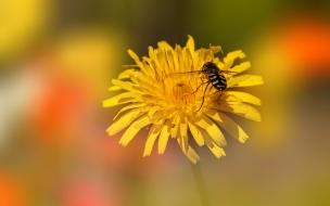 Una flor amarilla y una abeja