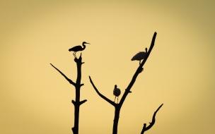 Aves en árboles