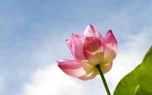 Una hermosa flor rosa