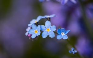 Flores celestes pequeñas
