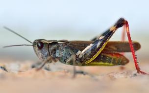 Insectos en macro