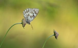 Mariposas en flores macro