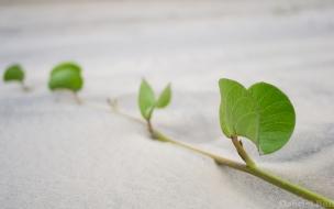 Hojas de plantas en la arena