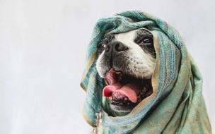 Bufandas para perros