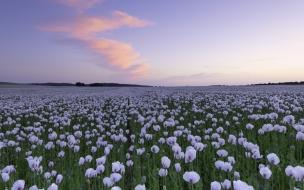 Jardin con flores blancas
