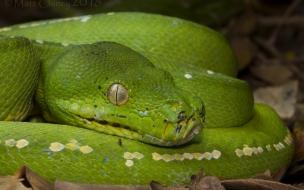 Serpiente de color verde