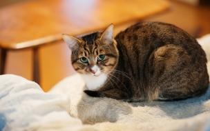 Un gato mirandote