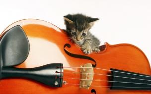 Gatito y violín