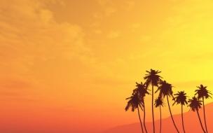 Atardecer con palmeras
