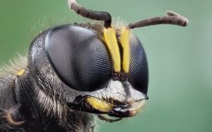 La cabeza de un insecto