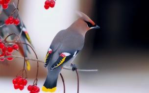 Una hermosa ave