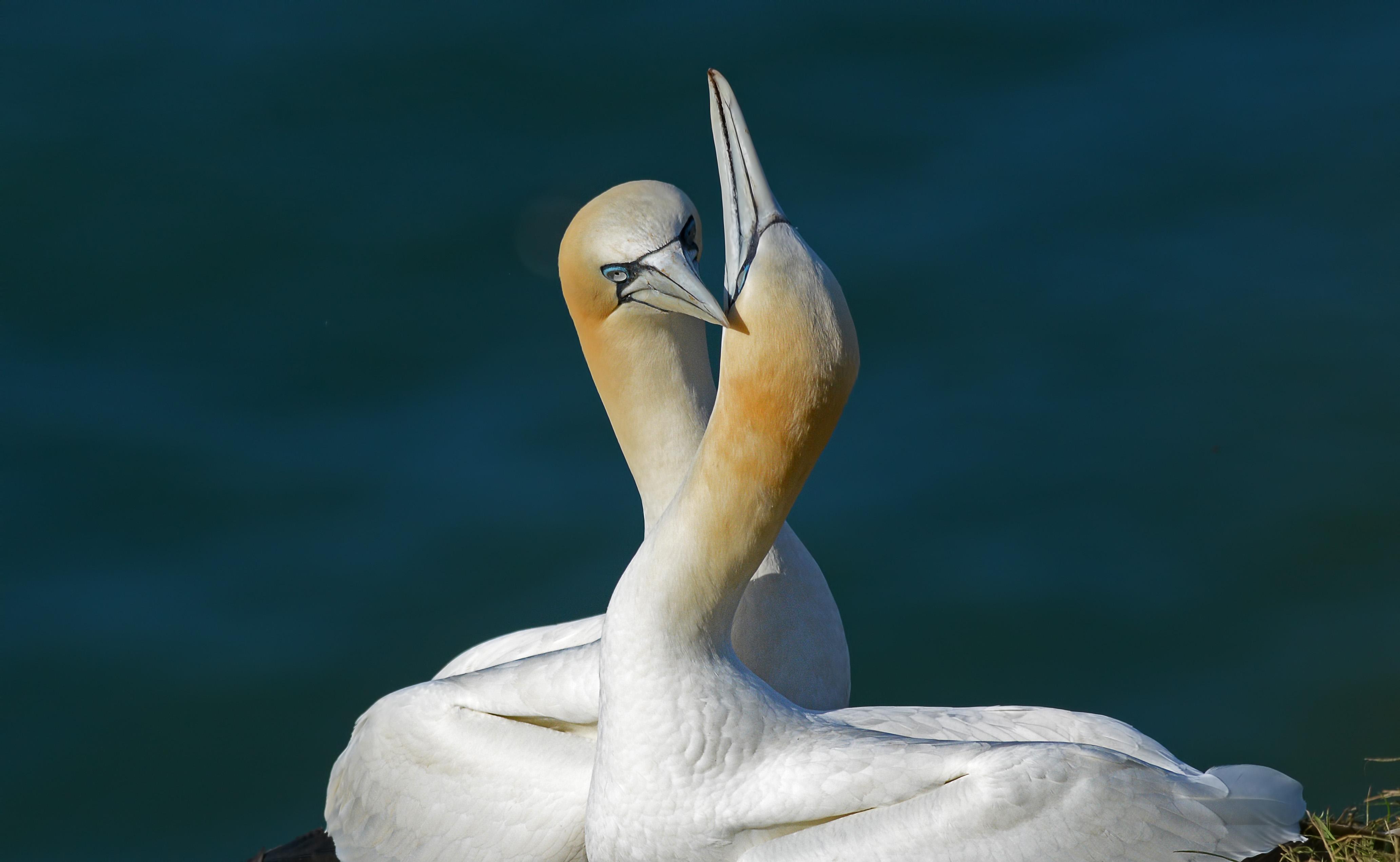 Amor en las aves - 4128x2540