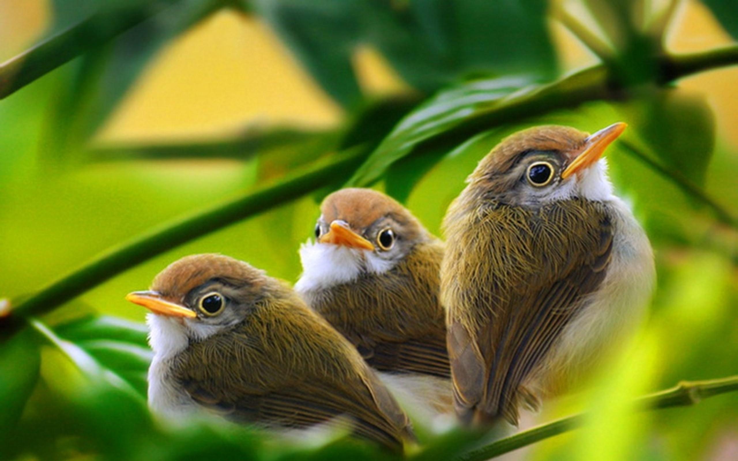 Angry Birds en la vida real - 2560x1600