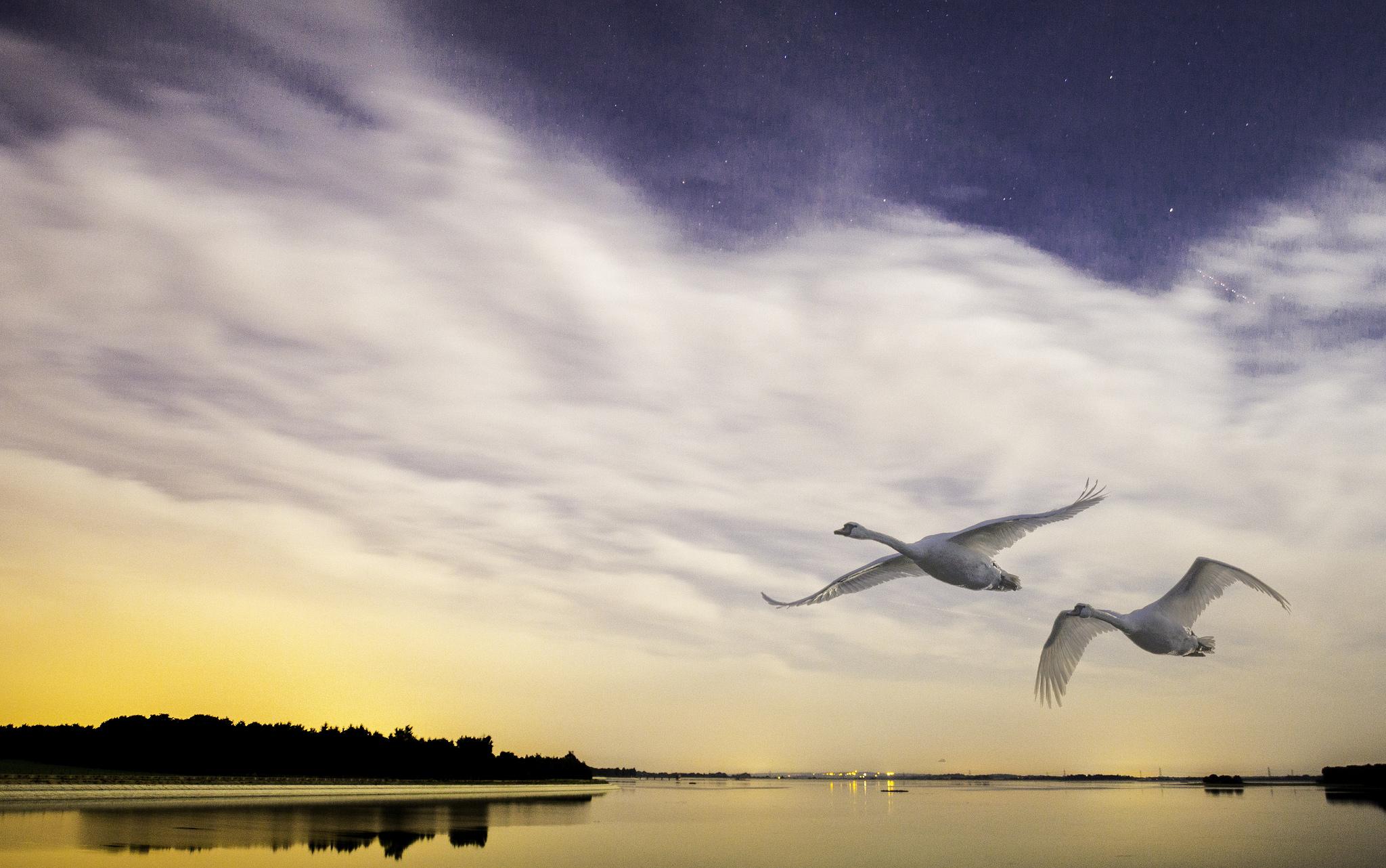 Aves volando sobre un lago - 2048x1282
