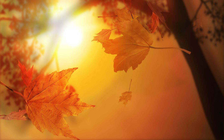 Caidas de hojas en otoño - 1440x900
