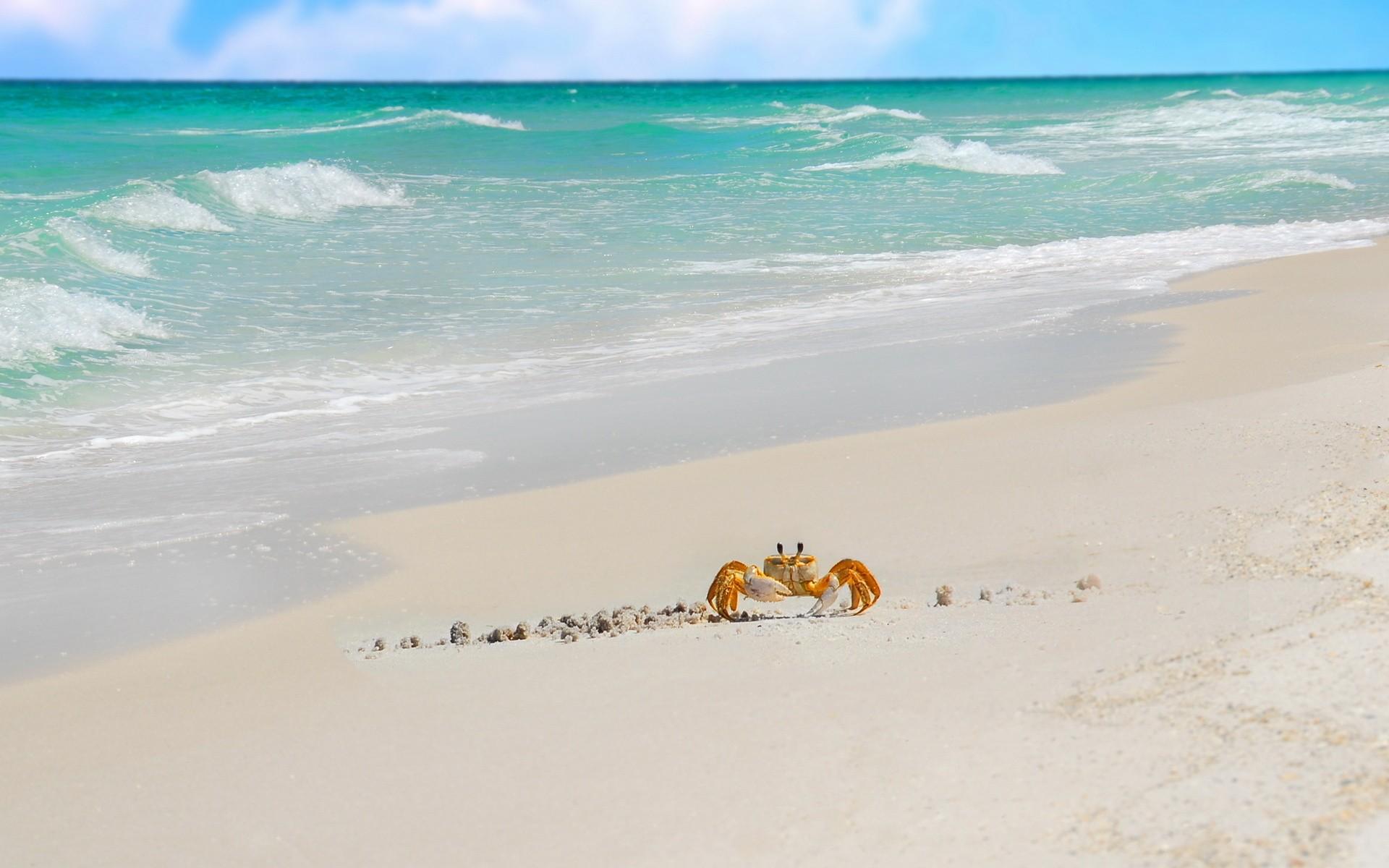 Cangrejo caminando en la playa - 1920x1200