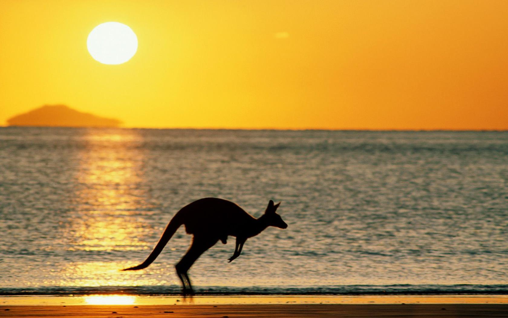 Canguro saltando en la playa - 1680x1050