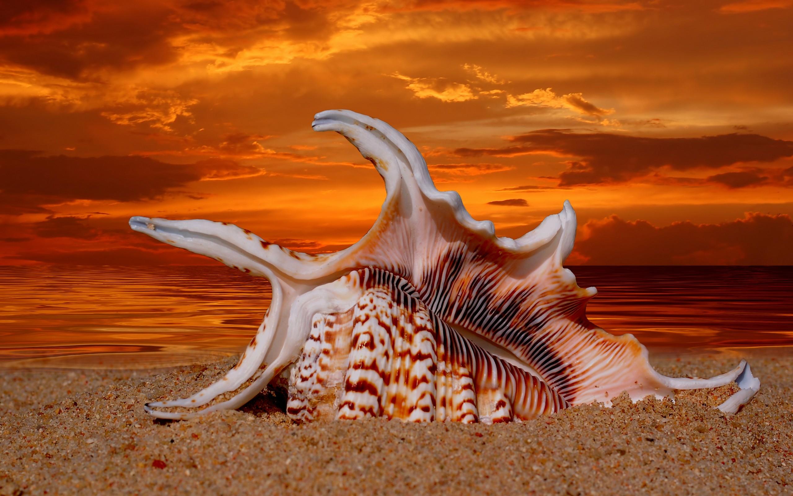 Conchas en las playas - 2560x1600