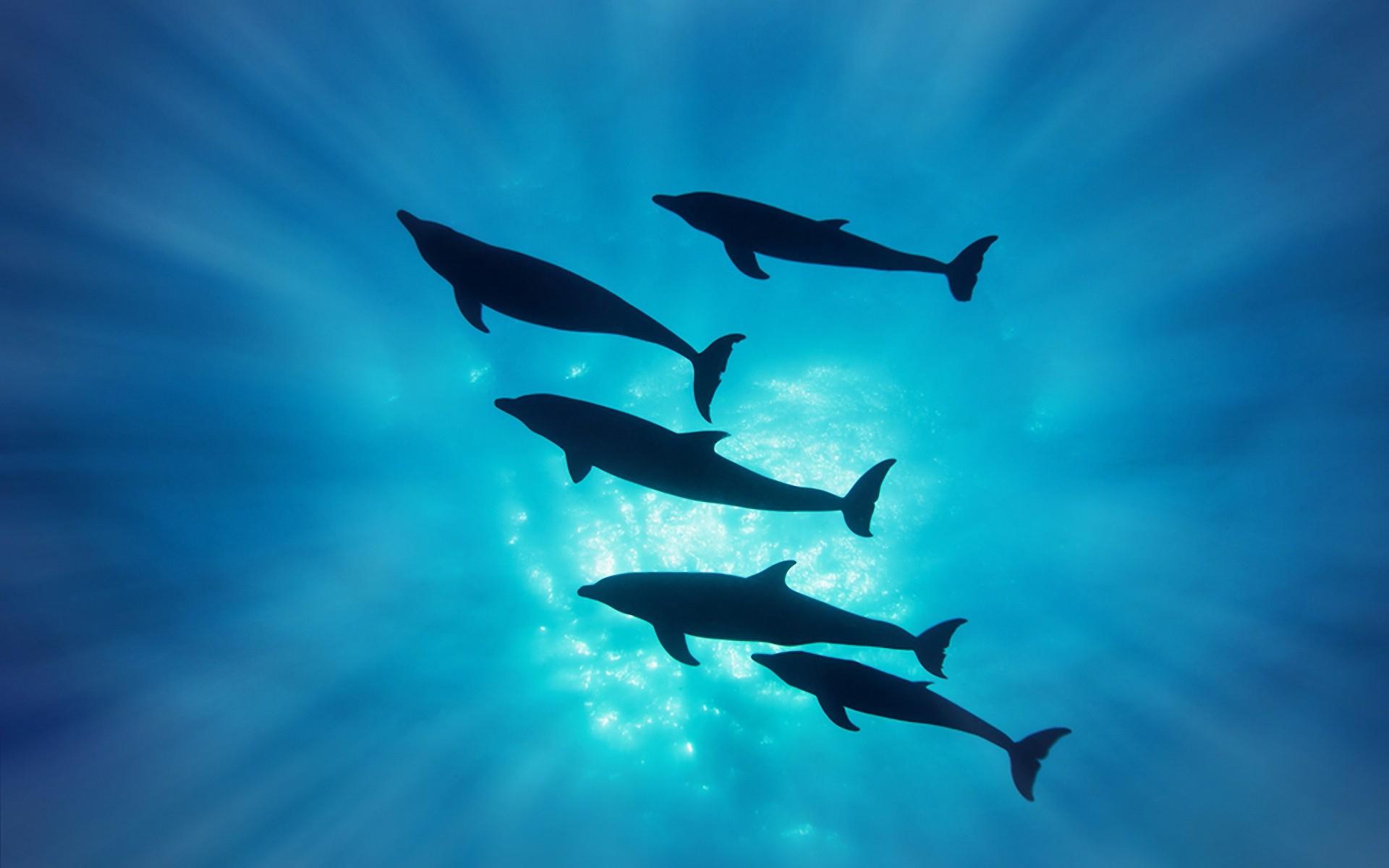 Delfines en el mar - 1920x1200