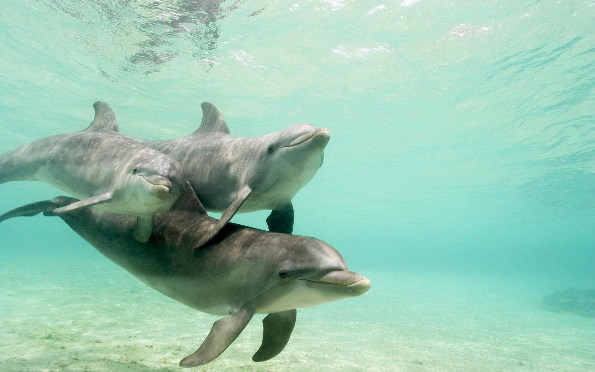 Delfines en el océano - 1920x1200