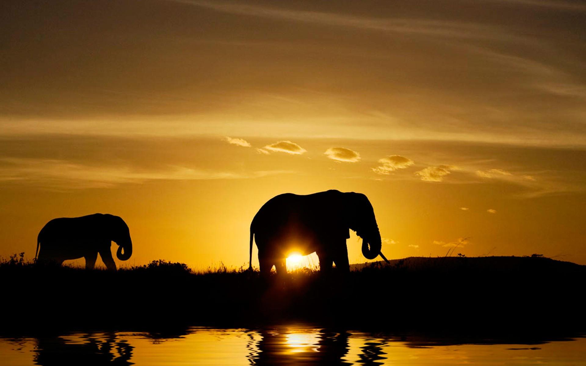 Elefantes en atardecer - 1920x1200