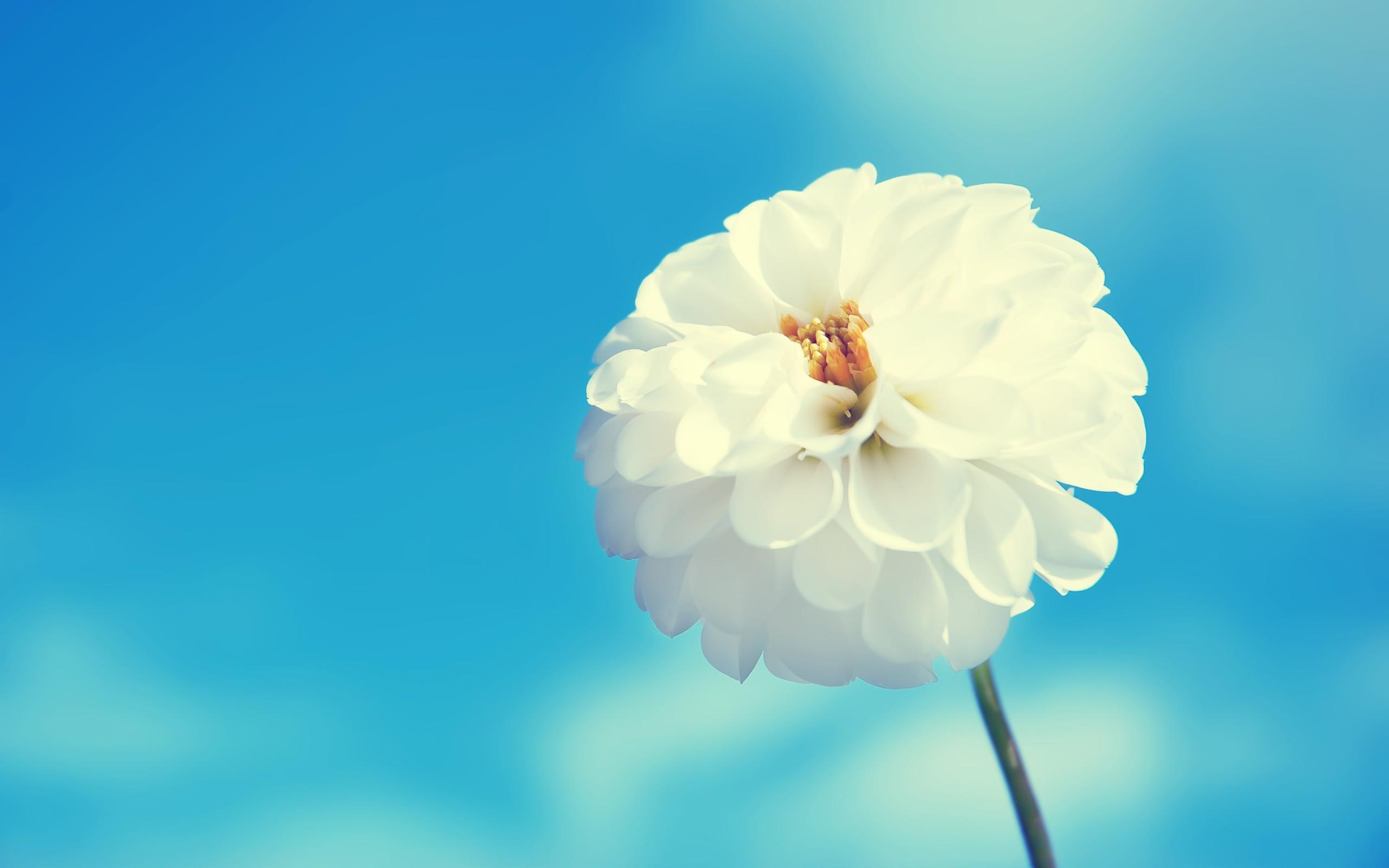 Flor macro - 2560x1600