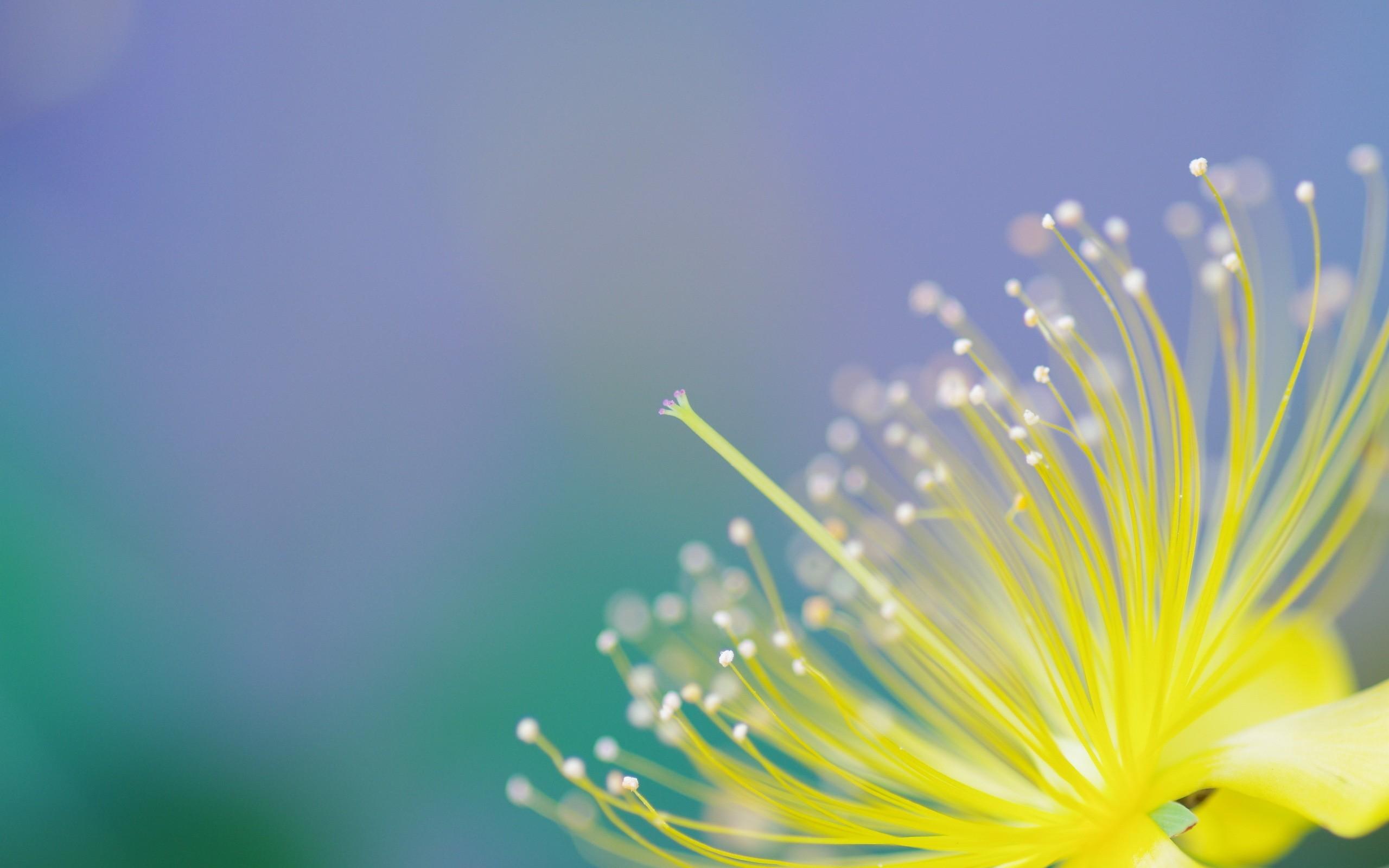 Flor macro y desenfoque - 2560x1600