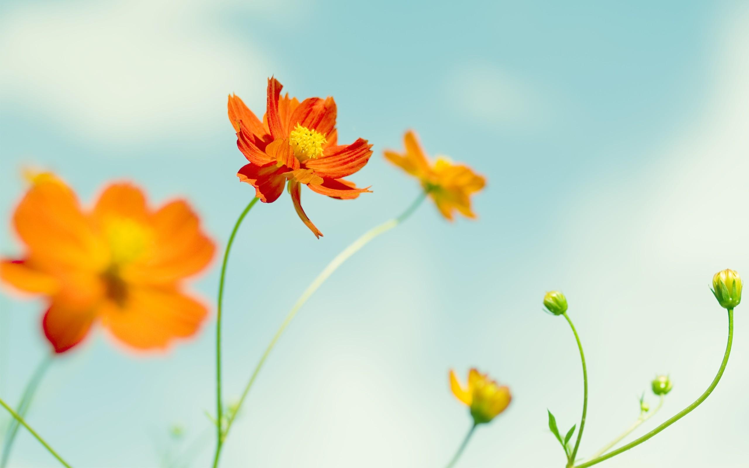Flor naranja - 2560x1600