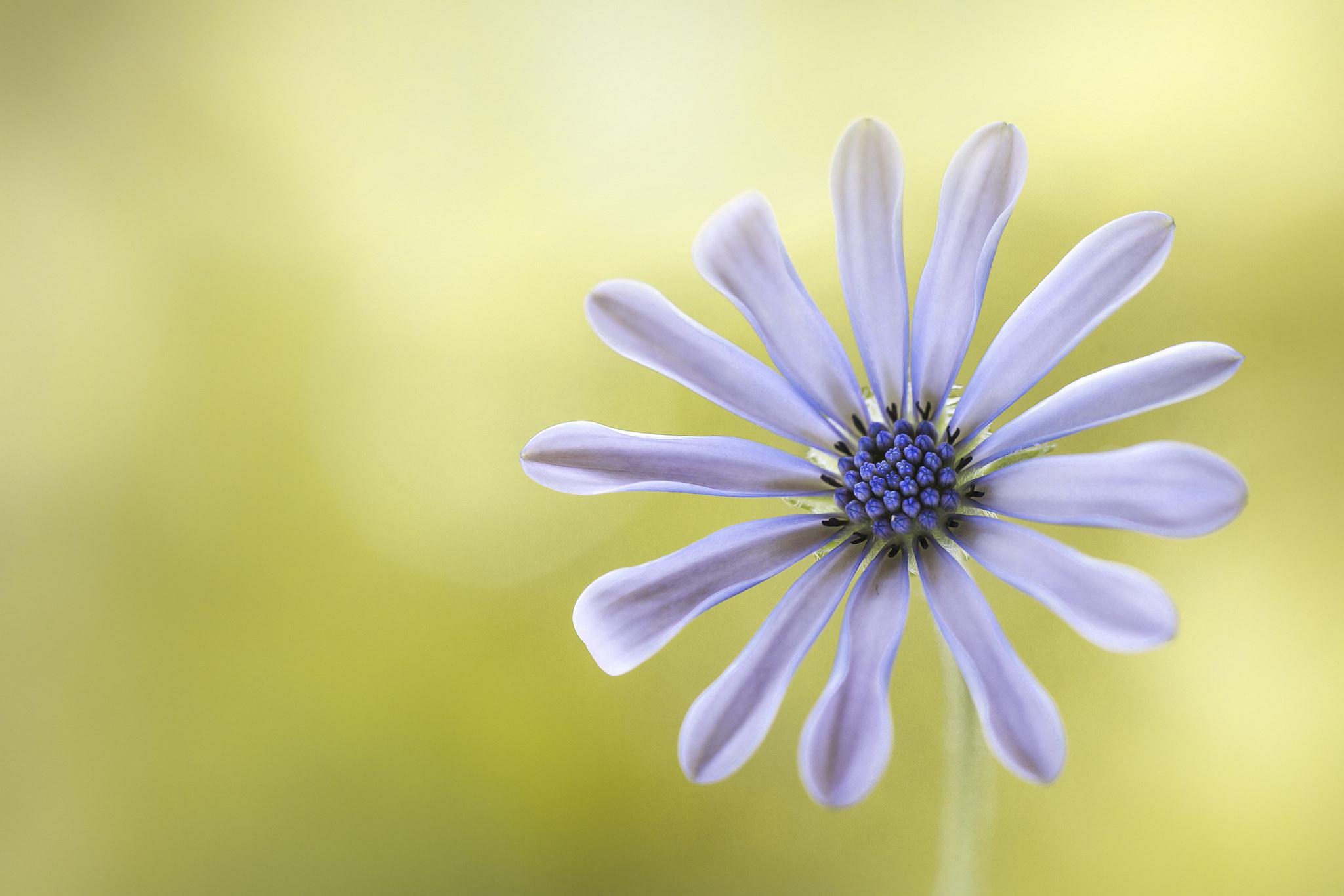 Flor púrpura - 2048x1366