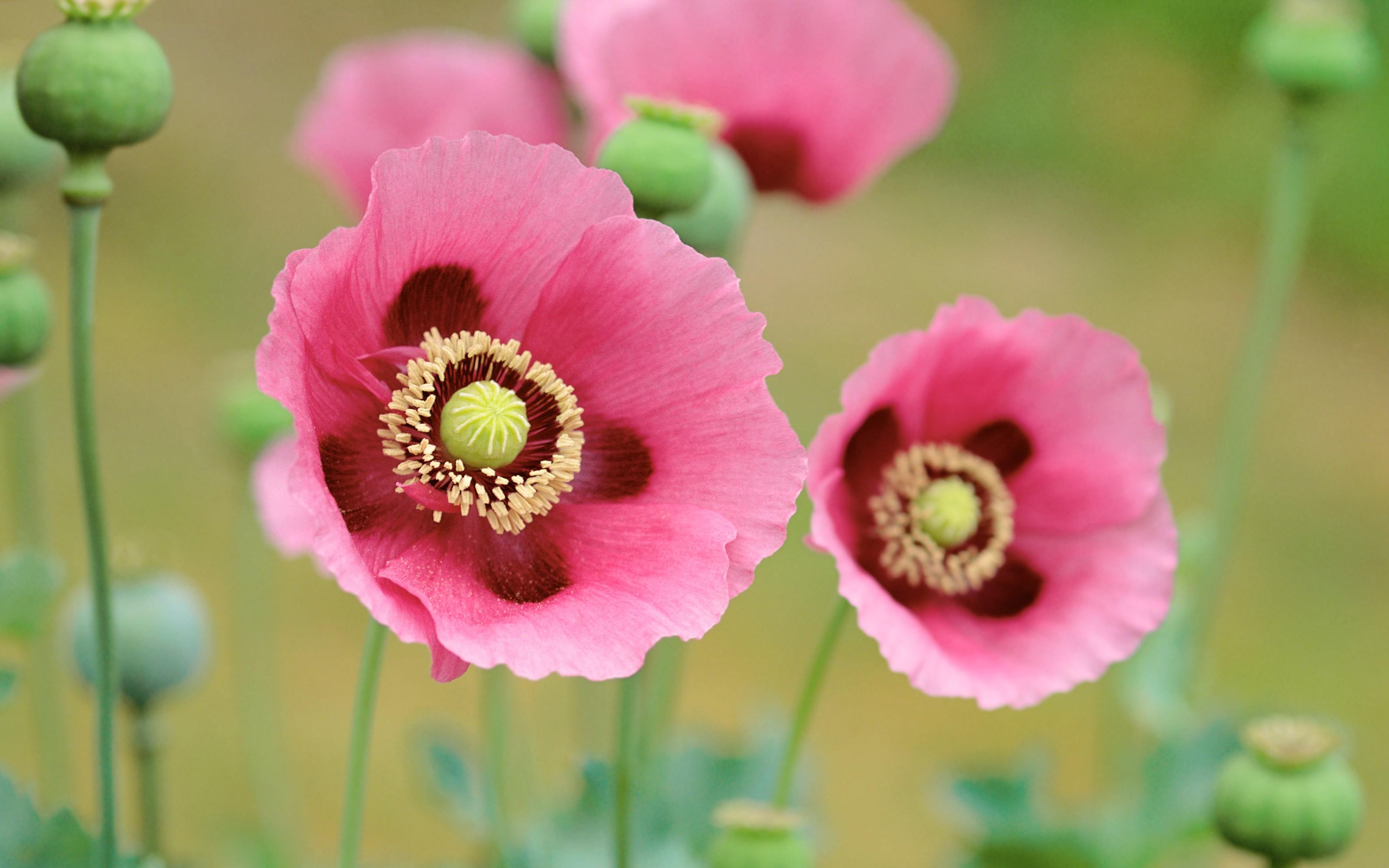 Flores en macro - 3200x2000