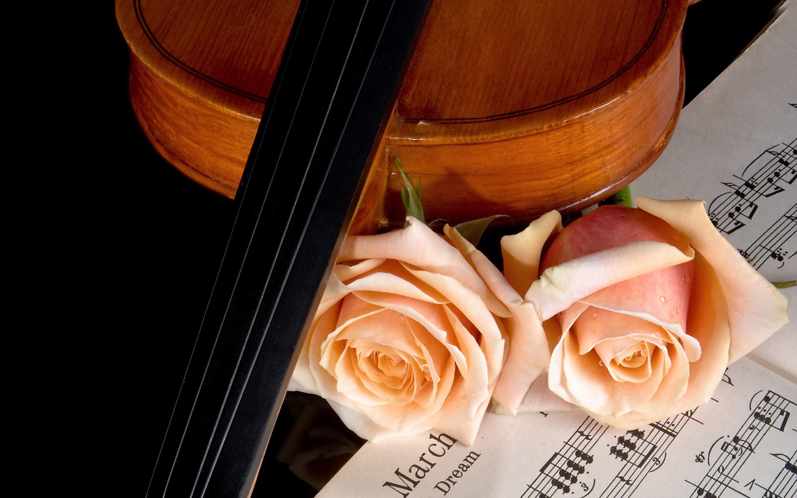 Flores rosadas y violin - 2560x1600