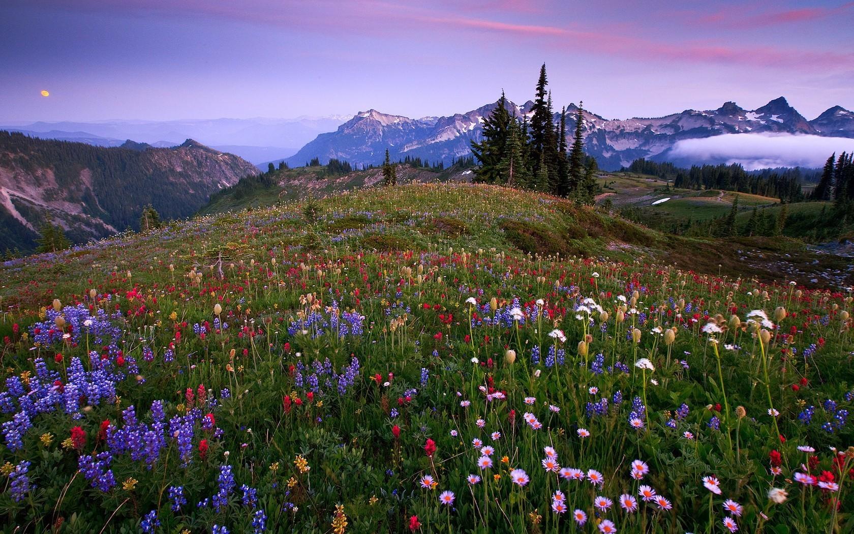 Flores silvestres en montañas - 1680x1050